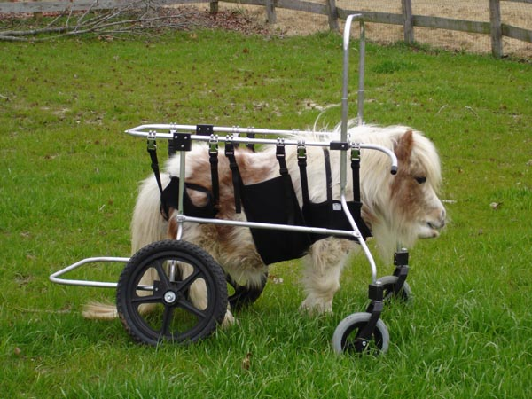 605020_horse_wheelchair2