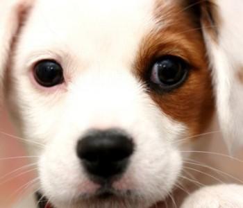 cute-dog-11