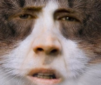nic-cage-cats