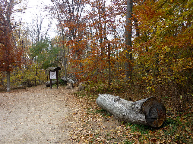 Theodore_Roosevelt_Island_entrance_clearing