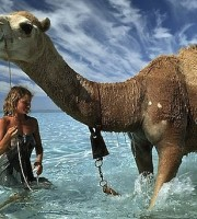tracks-mia-camel-in-ocean