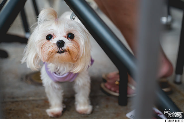 Adoption Doga Event
